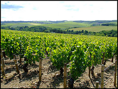 Chablis by Peter Curbishley, on Flickr