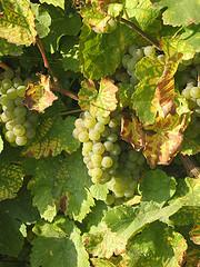 francuskie wina z Alzacji