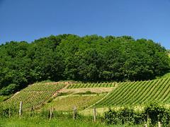 Podróże a wino